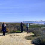 Birdwatching Ria Formosa Algarve