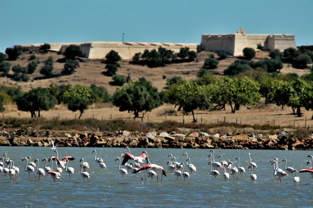 Castro Marim Nature Reserve, an enormous area of wetland, saltmarsh and saltpans at the eastern end of the Algarve which is home to a wealth of birdlife