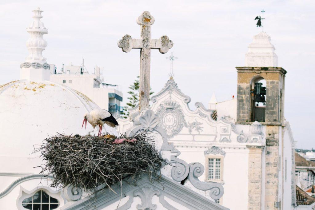 Stork's nest in Olhão