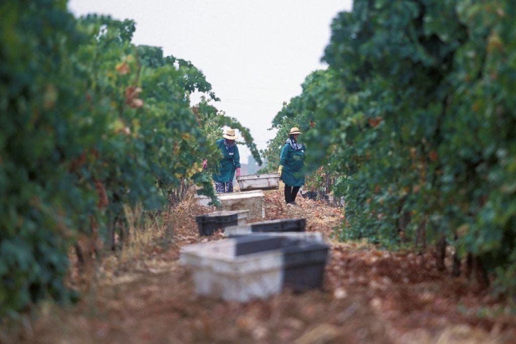 Wine estate West Algarve