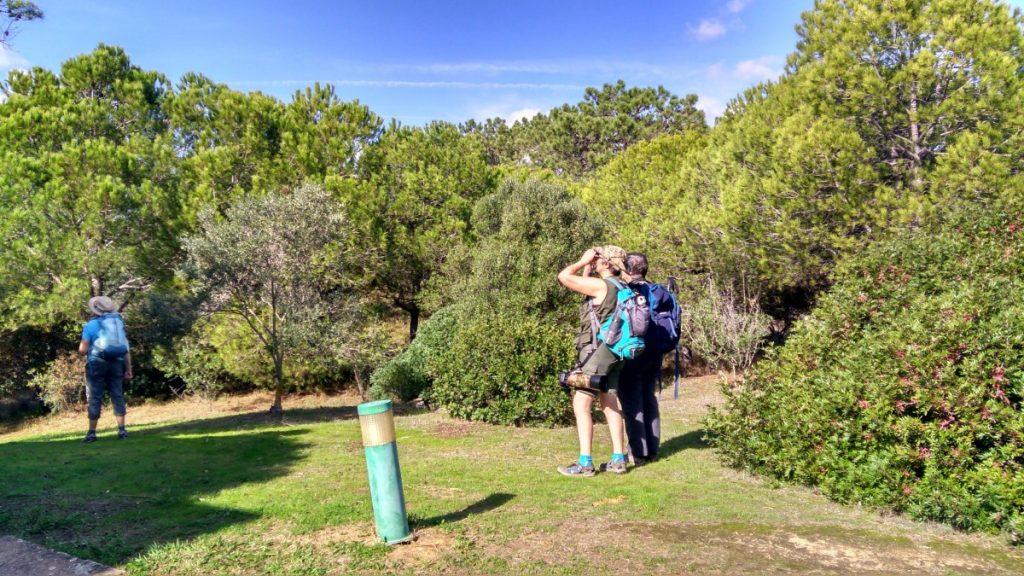 Natural Park Ria Formosa Birding