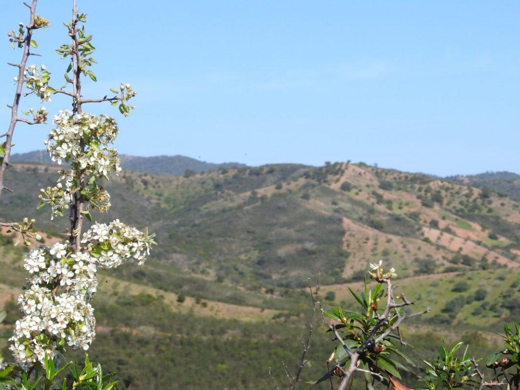 Serra do Caldeirão, delightful surrounding landscape, with cork oak and strawberry trees, heathers and cistus (rockrose)