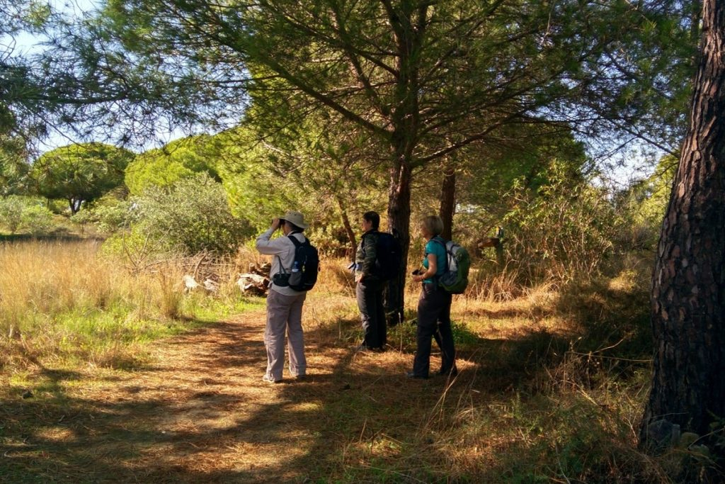 Ria Formosa Natural Park Bird watching