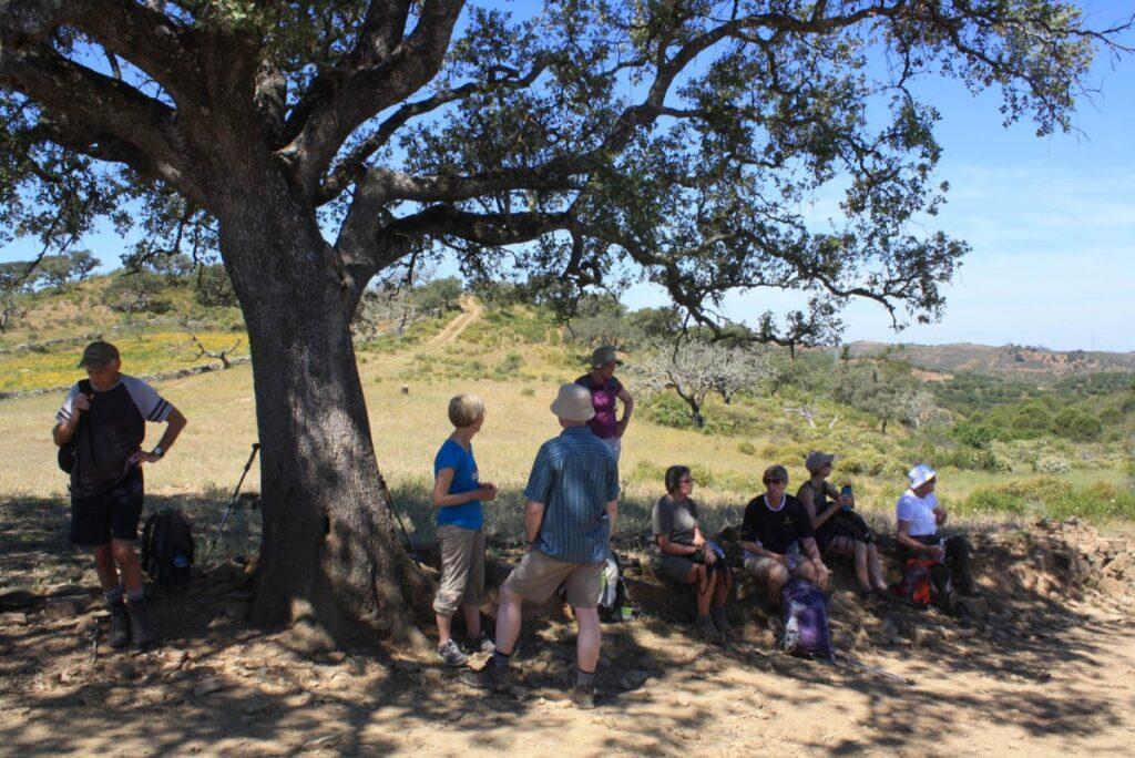 Walking Group Resting under a cork tree